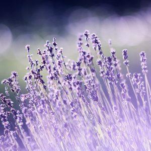 aromaterapiye giriş atölyesi